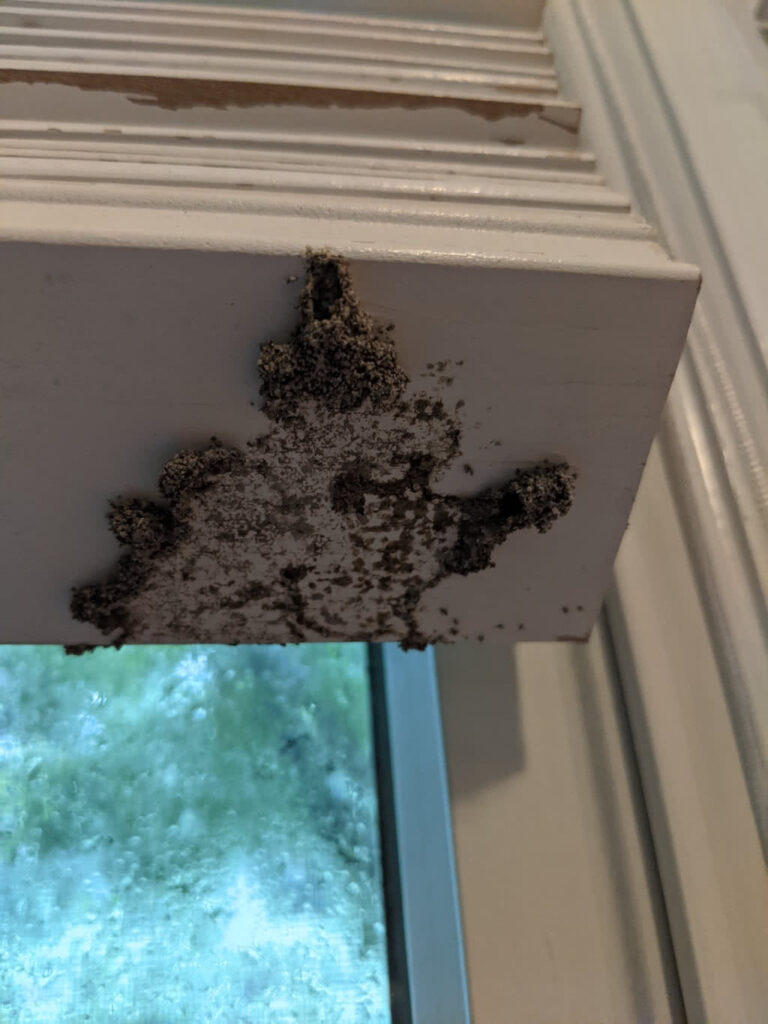 termite damage to wood window blinds